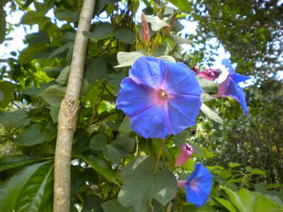 Beautiful Violet Flowers from our Yard in Boquete
